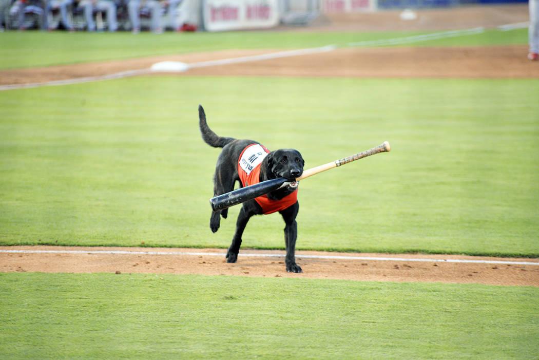El perro Finn, con 5 años de edad, es el encargado de ir por los bates que los jugadores avientan luego de conectar la bola. Es de la raza labrador y está muy bien educado. Del 27 al 30 de julio ...