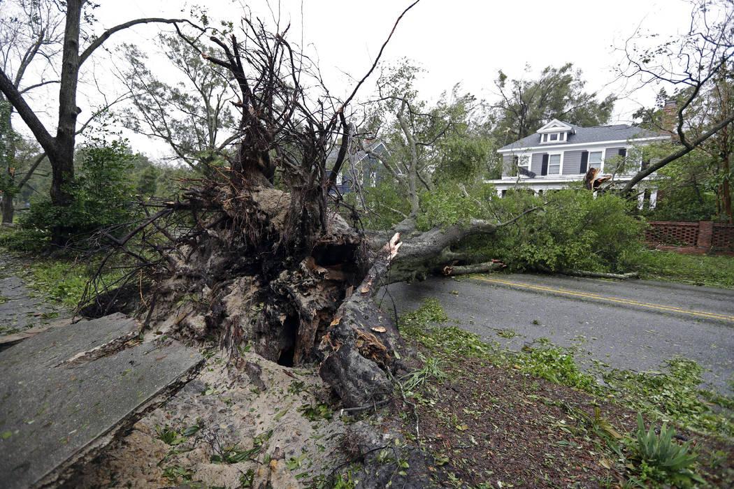 Un árbol desarraigado por fuertes vientos se encuentra en una calle de Wilmington, Carolina del Norte, después de que el huracán Florence tocara tierra el viernes 14 de septiembre de 2018. (AP ...