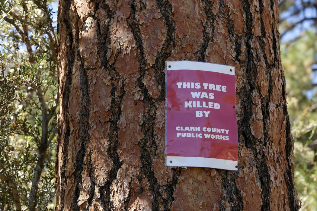 Señales marcan árboles que algunos residentes de Old Town en Mount Charleston afirman que fueron envenenados por la sal utilizada por las Obras Públicas del Condado de Clark para deshielo de la ...