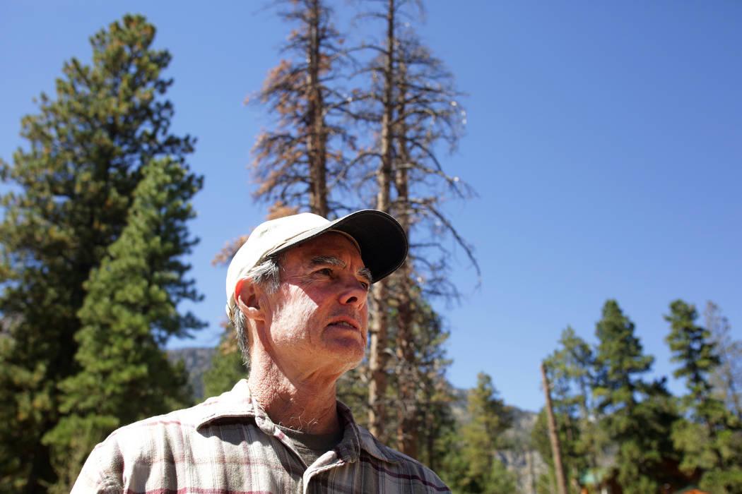 El residente de Mount Charleston, Tom Padden, se para frente a dos de los cientos de árboles que según él fueron envenenados por la sal utilizada por las Obras Públicas del Condado de Clark pa ...
