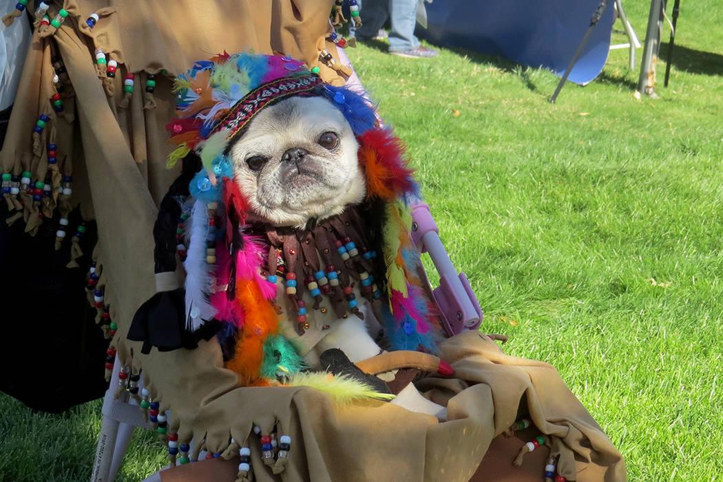 ARCHIVO.- Esta mascota fue una de las ganadoras con su disfraz de Pocahontas. Sábado 14 de octubre del 2017, en Exploration Park.   Foto Anthony Avellaneda / El Tiempo.