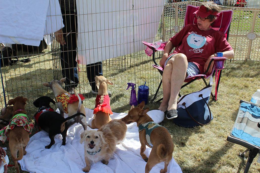 Todos los perros usaron correa para el festival. Sábado 13 de octubre de 2018 en el parque Exploration. Foto Cristian De la Rosa / El Tiempo - Contribuidor.