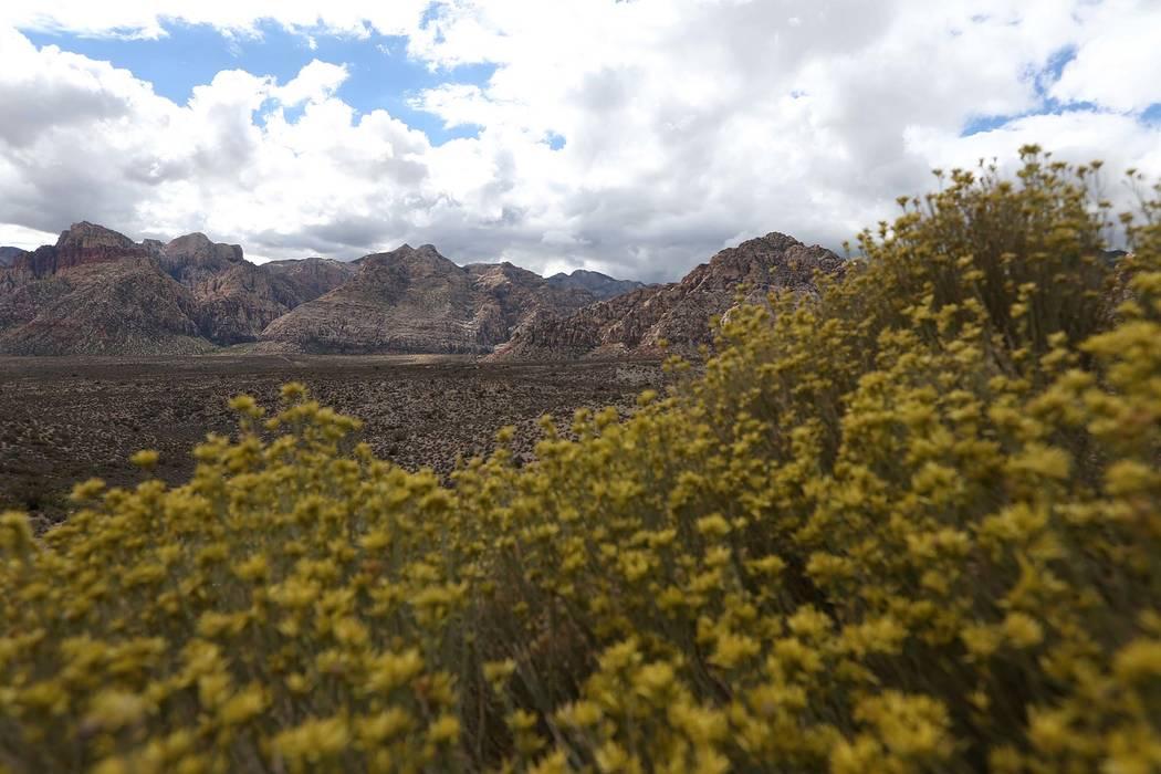 Red Rock Canyon en Las Vegas. (Erik Verduzco / Las Vegas Review-Journal) @Erik_Verduzco