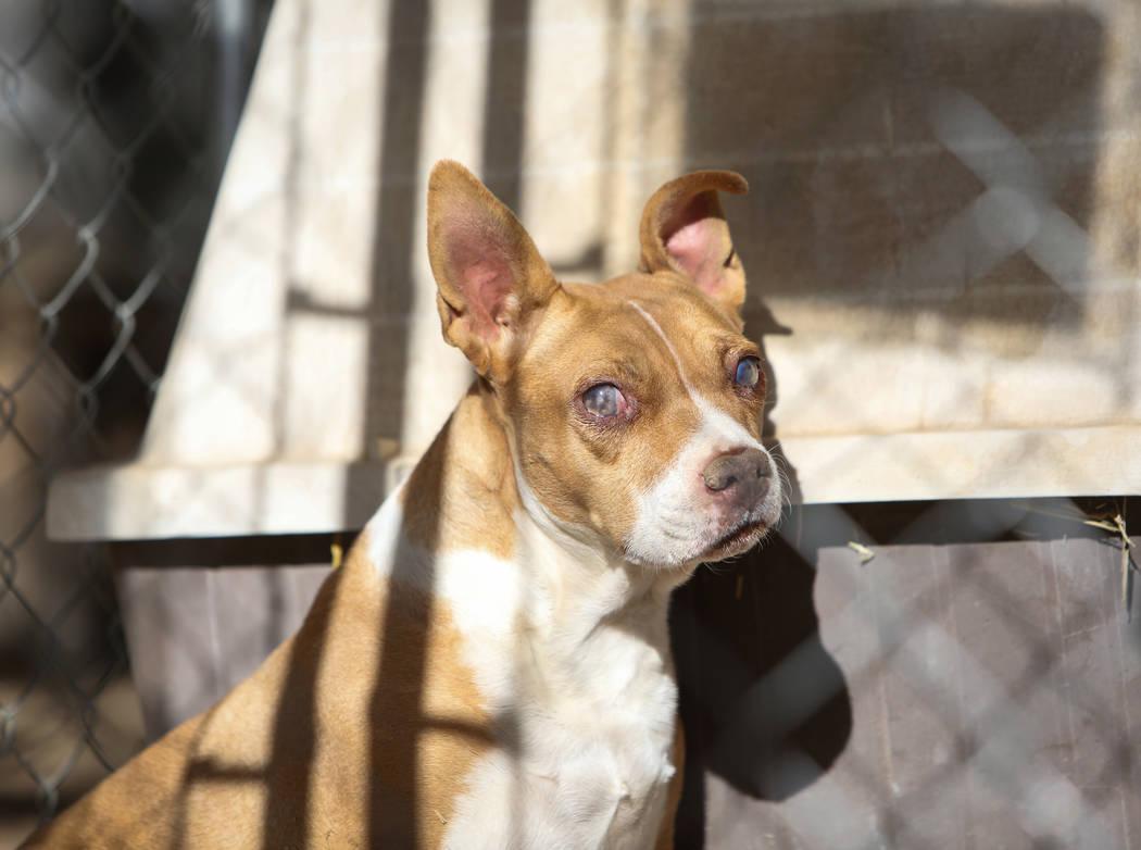 Grace es uno de los muchos animales rescatados por Barn Buddies Rescue, una organización sin fines de lucro dedicada al rescate de animales de granja abusados, abandonados o heridos, en The Farm ...