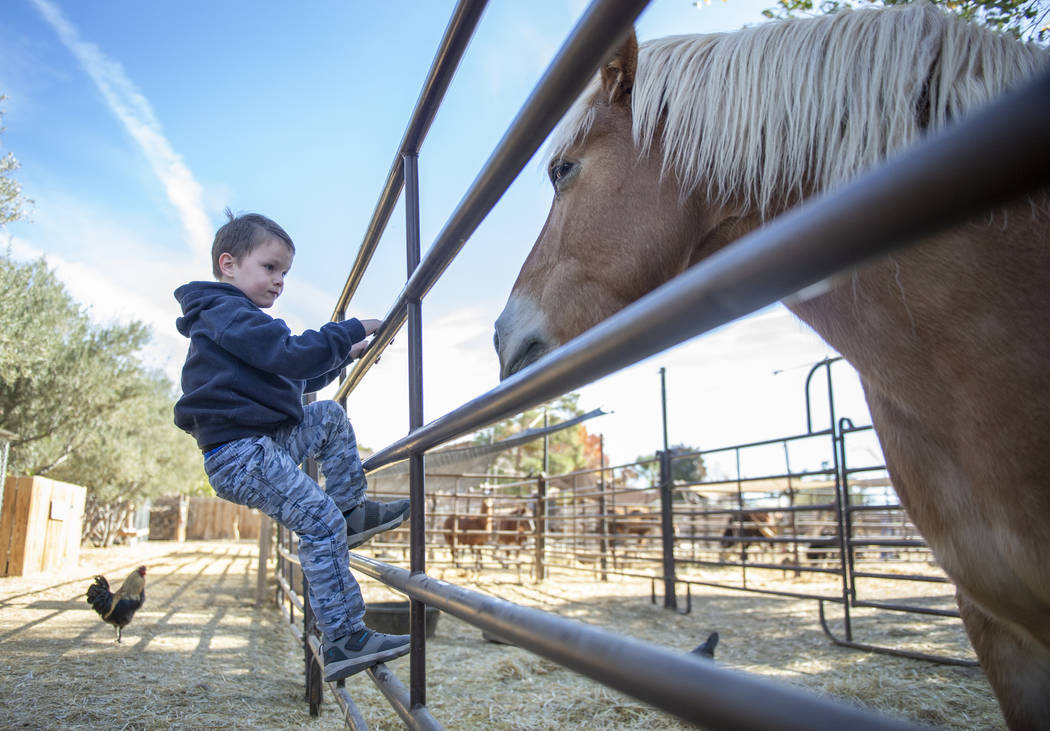 Callen Phillips, 4, de Grand Junction, Colorado, mira a uno de los caballos en The Farm en Las Vegas, el domingo 25 de noviembre de 2018. Caroline Brehman / Las Vegas Review-Journal