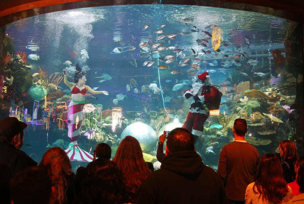 Underwater Santa y la sirena navideña saludan a la multitud en el hotel y casino Silverton en Las Vegas, el domingo 2 de diciembre de 2018. Están en el acuario todos los sábados y domingos de d ...