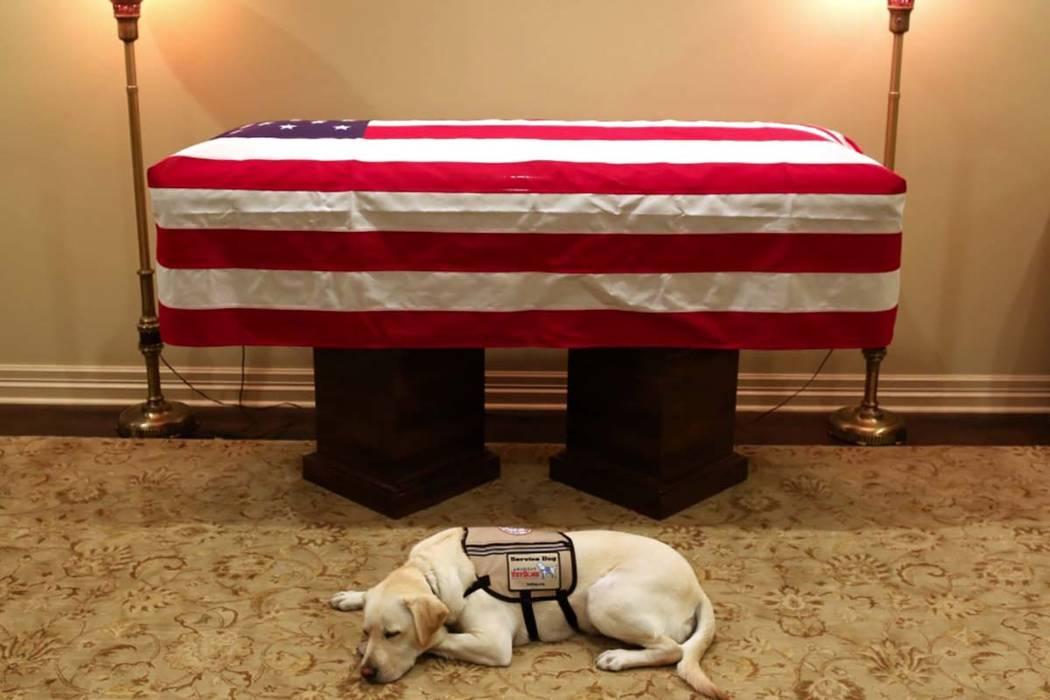 """El portavoz del ex presidente George H.W. Bush, Jim McGrath, publicó la foto el domingo en Twitter del Labrador Retriever amarillo llamado Sully con la leyenda """"Misión completa. # Recordando41"""". ..."""