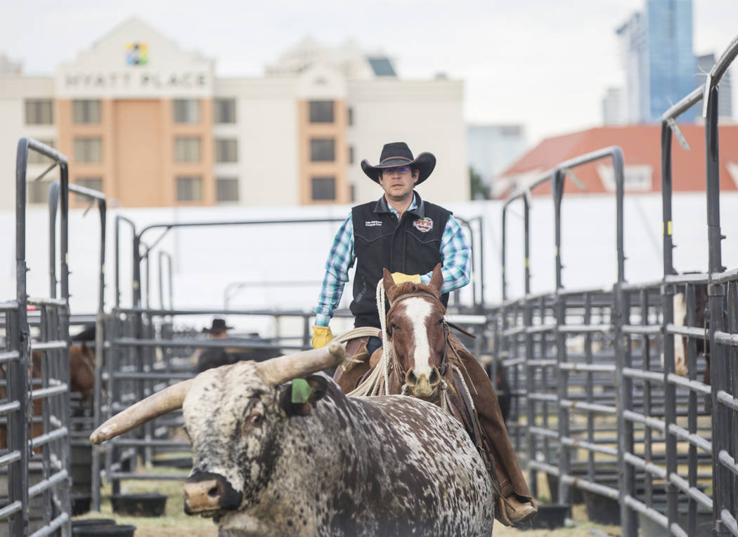 Luke Hutchison, de Belgrado, Montana, pastorea toros el martes 4 de diciembre de 2018, en el campo intramural de la UNLV, en Las Vegas. Benjamin Hager Las Vegas Review-Journal