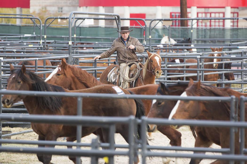 Chris Dutton, de Grass Range, Mont., monta caballos el martes 4 de diciembre de 2018, en el campo intramural de la UNLV, en Las Vegas. Benjamin Hager Las Vegas Review-Journal