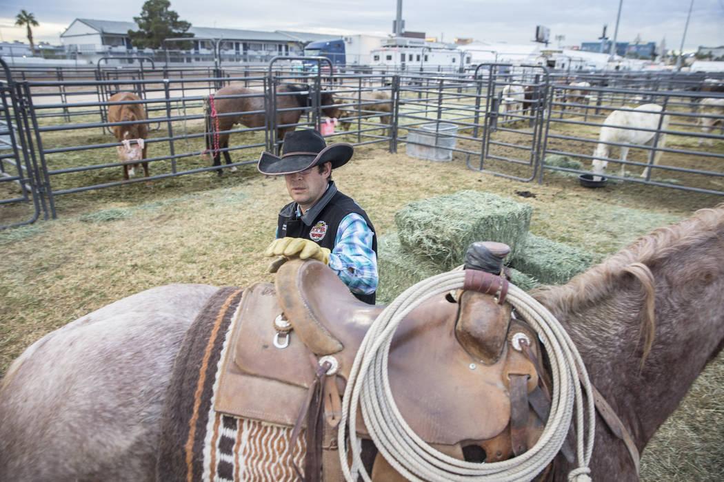 Luke Hutchison, de Belgrado, Mont., asegura una montura sobre un caballo el martes 4 de diciembre de 2018, en el campo intramural de la UNLV, en Las Vegas. Benjamin Hager Las Vegas Review-Journal