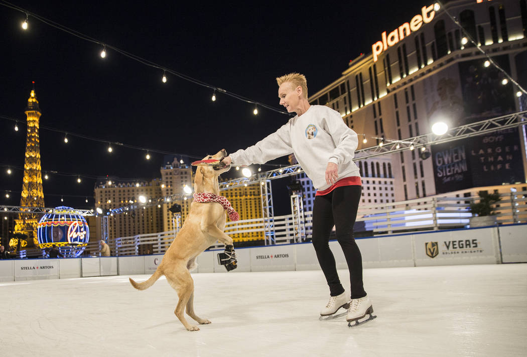 Benny, left, a Labrador Retriever mix, plays with Cheryl Del Sangro at The Cosmopolitan of Las Vegas on Wednesday, Dec. 12, 2018, in Las Vegas. Benjamin Hager Las Vegas Review-Journal