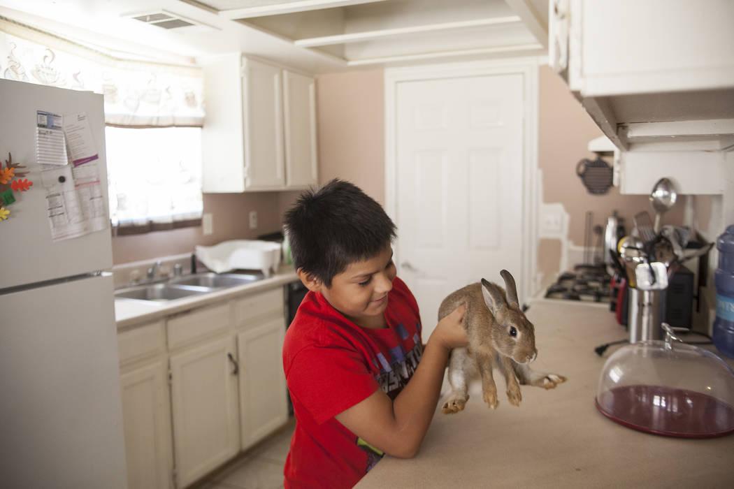 Iván Meneses, de 10 años, juega con Brownie II en su casa en Las Vegas, el jueves 10 de agosto de 2017. La madre de Meneses teme que un cambio en las leyes actuales de atención médica le quite ...