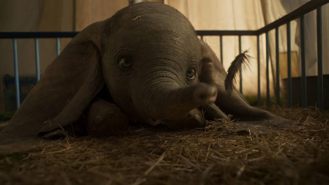 """OREJAS PARA TI: en el nuevo largometraje de acción en vivo """"Dumbo"""" de Disney, un elefante recién nacido con orejas demasiado grandes lo convierte en un hazmerreír en un circo que ya tiene dific ..."""