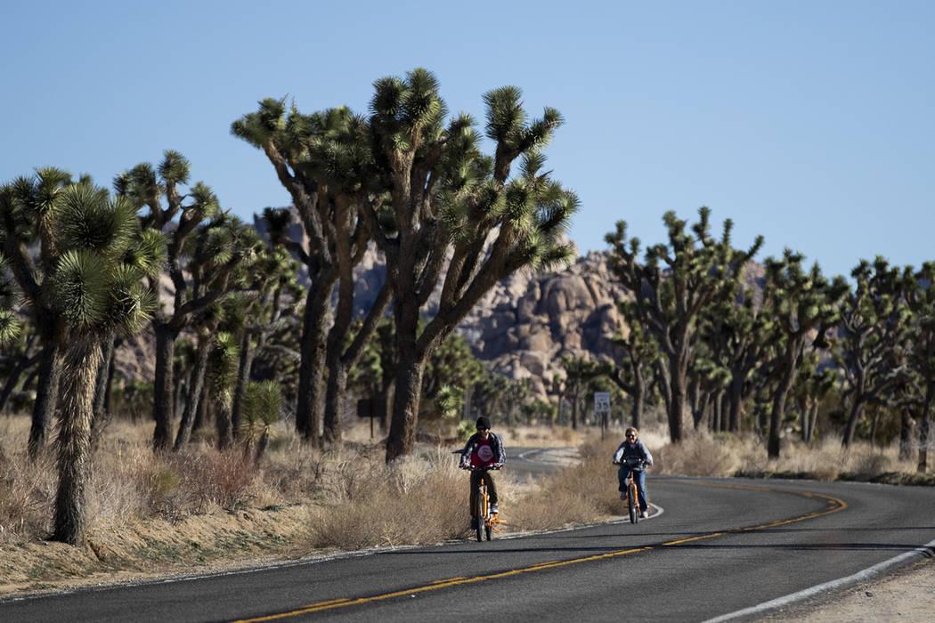 Dos visitantes viajan en sus bicicletas a lo largo de la carretera en el Parque Nacional Joshua Tree en el desierto de Mojave al sur de California, el jueves 10 de enero de 2019. Después de todo, ...