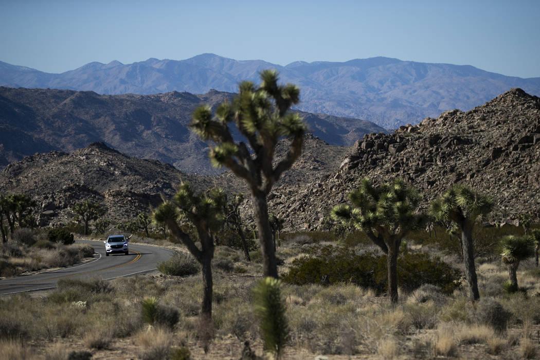 Un automóvil conduce a lo largo de la carretera en el Parque Nacional Joshua Tree en el desierto de Mojave al sur de California, el jueves 10 de enero de 2019. Después de todo, el parque naciona ...