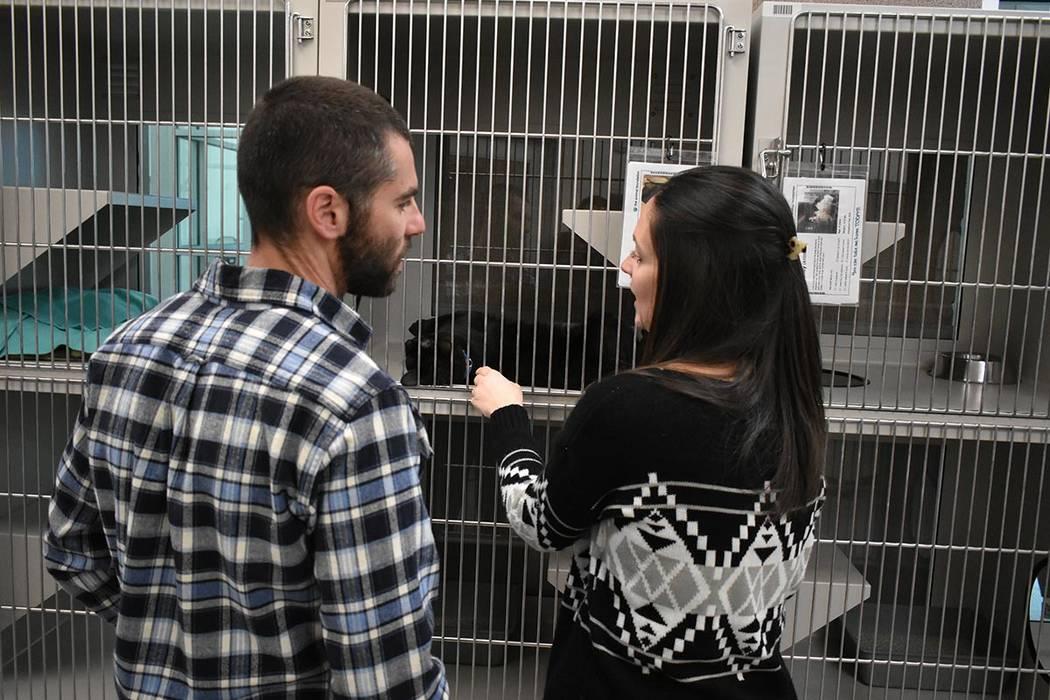 Los animales podrán recibir un cuidado de primer nivel mientras esperan a ser adoptados. Martes 12 de febrero de 2019 en 'The Animal Foundation'. Foto Anthony Avellaneda / El Tiempo.