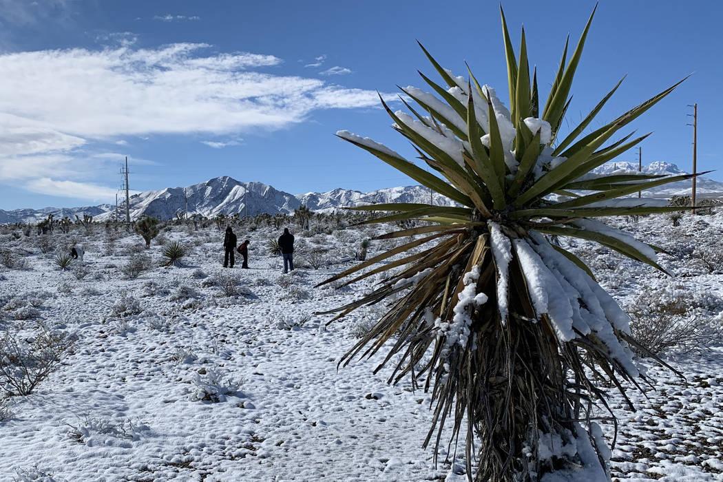El lunes, 18 de febrero de 2019, una capa de nieve cubrió el suelo a lo largo de la Ruta 156 del estado de Nevada (Lee Canyon Road), cerca de la US 95, En las afueras de Las Vegas. Mount Charlest ...