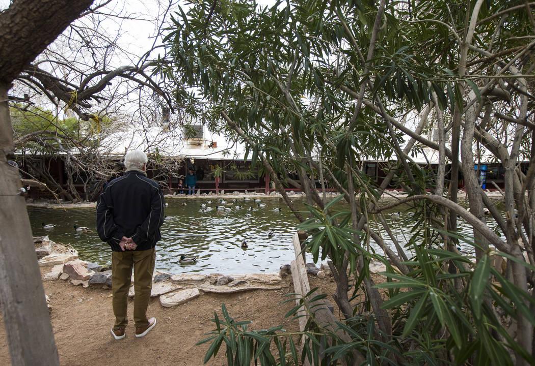 Un visitante mira un estanque en Bonnie Springs Ranch fuera de Las Vegas el sábado 12 de enero de 2019. Chase Stevens Las Vegas Review-Journal @csstevensphoto
