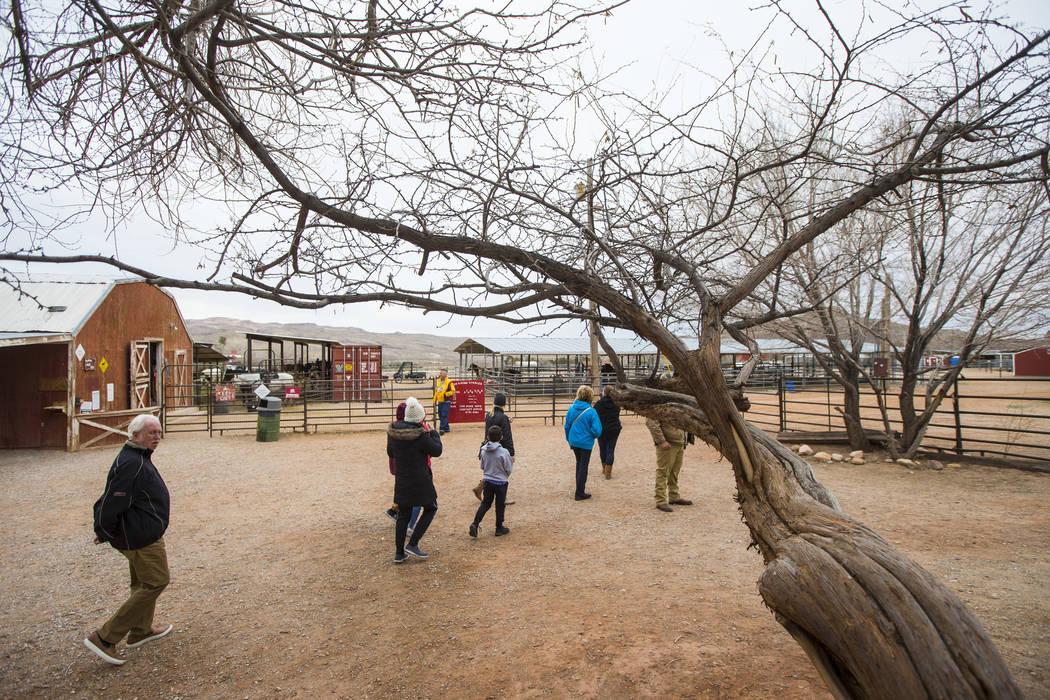 Los visitantes caminan alrededor de los establos de Red Rock en Bonnie Springs Ranch fuera de Las Vegas el sábado 12 de enero de 2019. Chase Stevens Las Vegas Review-Journal @csstevensphoto