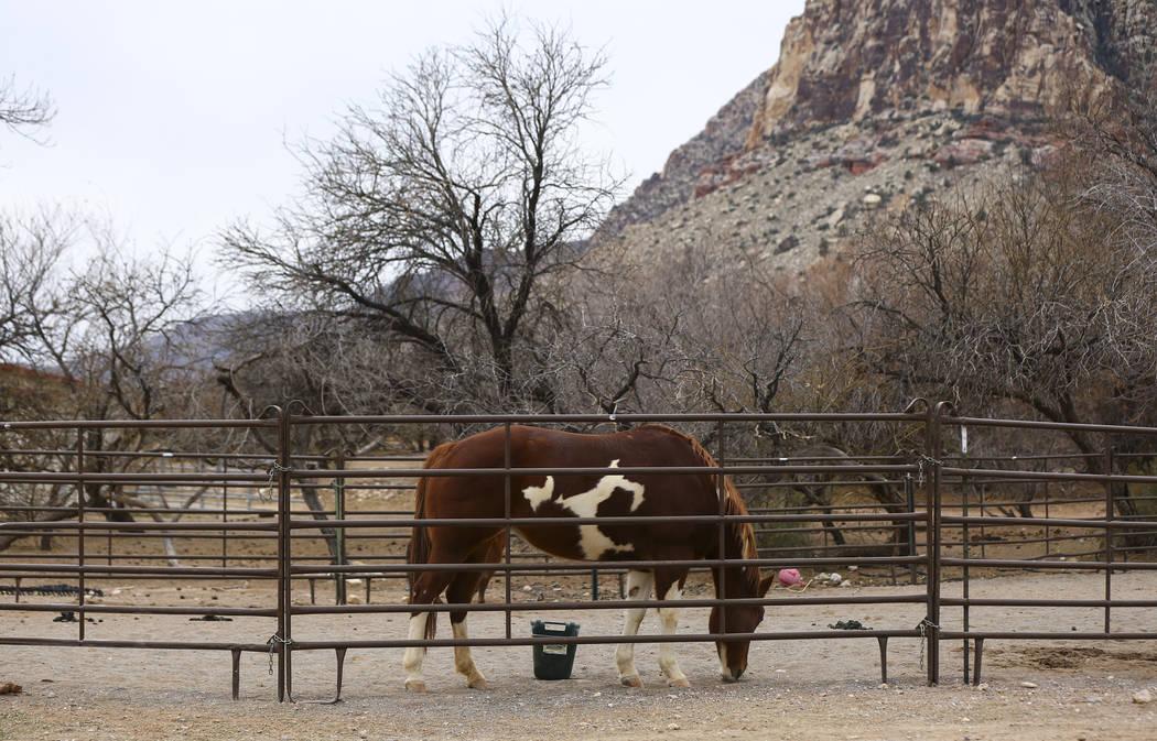 Un caballo en Bonnie Springs Ranch, en las afueras de Las Vegas, el sábado 12 de enero de 2019. La Comisión de Planificación del Condado de Clark temprano el miércoles 20 de febrero de 2019, a ...