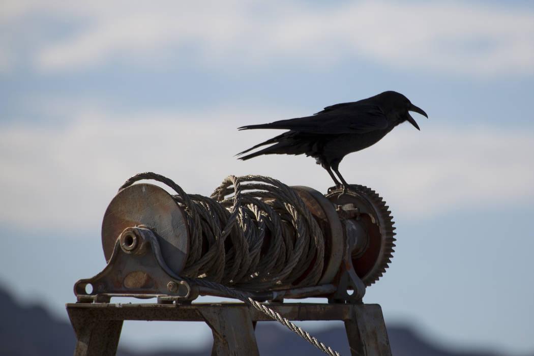 Un pájaro se posa en los restos de algunos equipos de navegación cerca del lago Mead Marina en el Área de recreación nacional de Lake Mead el domingo 14 de octubre de 2018. Richard Brian Las V ...