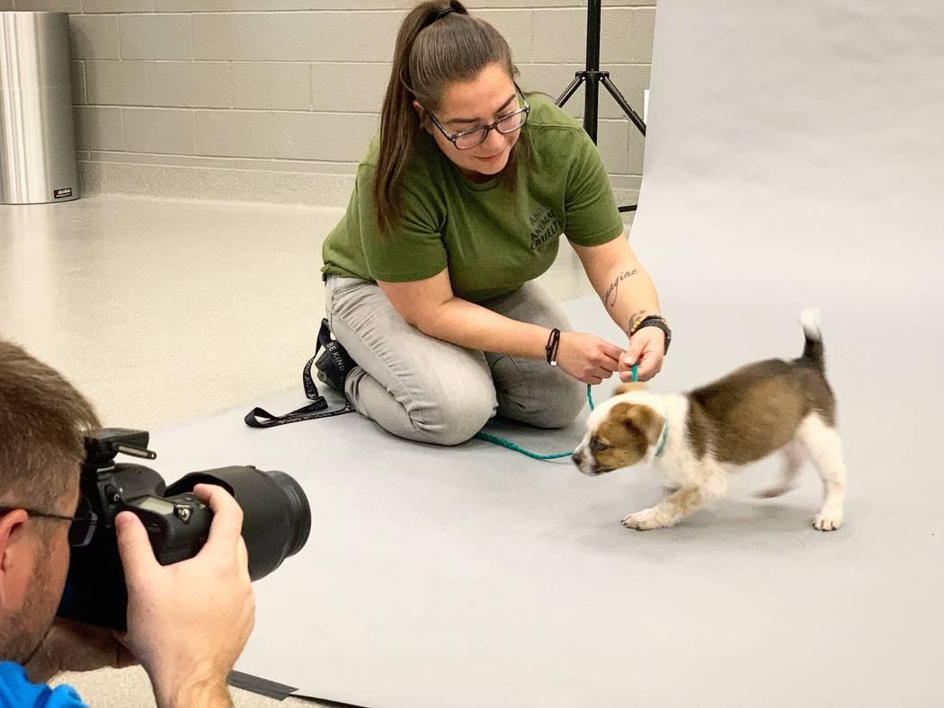 Athena se toma una foto en preparación para el evento Best in Show de Las Vegas Animal Foundat ...