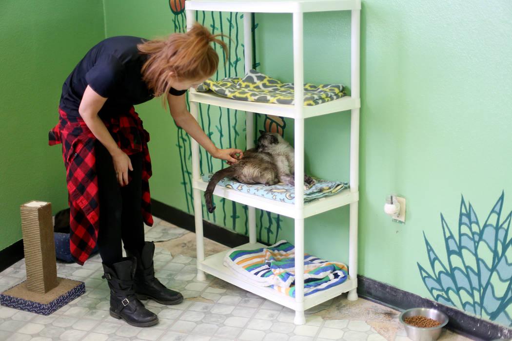 """La coordinadora de adopciones, Shelby Haycock, acaricia a Havana en el área """"Cat Condo"""" de la ..."""