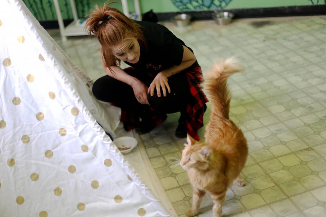 """La coordinadora de adopciones, Shelby Haycock, juega con Gingeraffe en el área """"Cat Condo"""" de ..."""