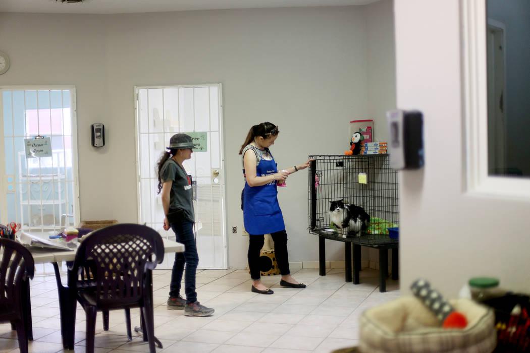 """Un voluntario, quien se negó a ser nombrado, habla con Oreo en el área """"Cat Condo"""" de la Soci ..."""