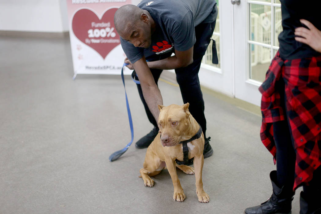 Acarician a Gunner en la Sociedad de Nevada para la Prevención de la Crueldad Animal en Las Ve ...