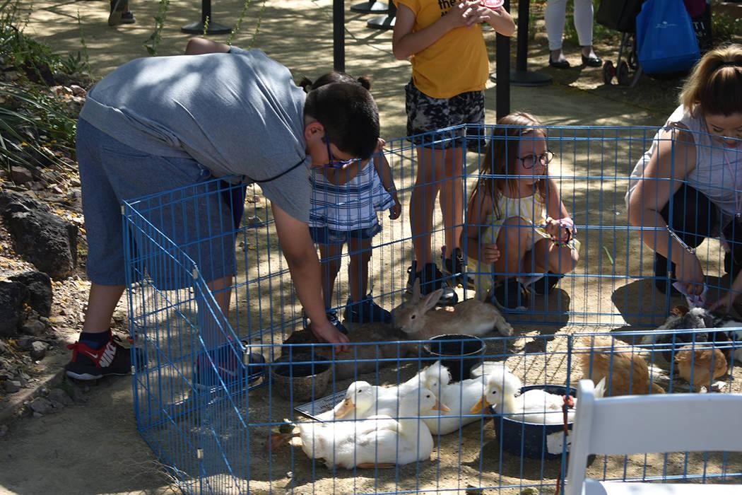 El zoológico para infantes fue una de las actividades más disfrutadas por los asistentes. Sábado 27 de abril de 2019 en Springs Preserve. Foto Anthony Avellaneda / El Tiempo.