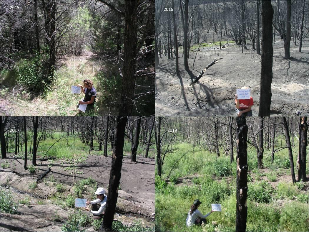 Los investigadores sostienen carteles que registran las condiciones del bosque antes y después ...