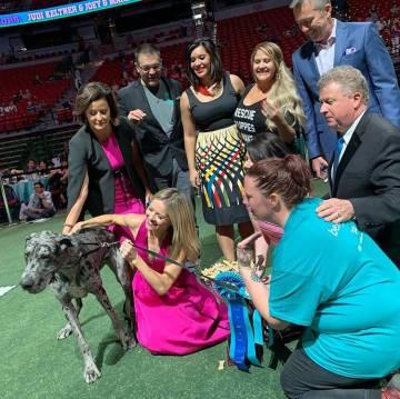 Dottie, además de llevarse su listón azul de competencia, fue puesta en adopción a un nuevo ...