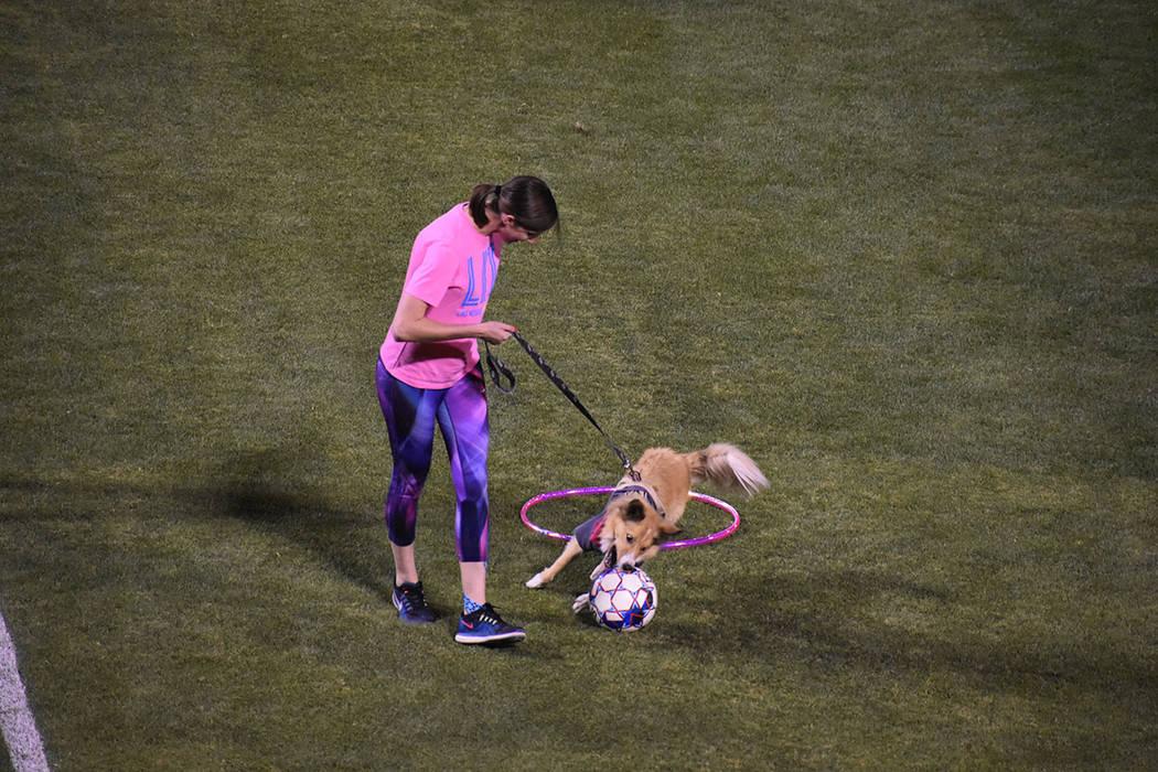 Las Vegas Lights FC impulsó una campaña para que la gente llevara a sus mascotas, que incluso ...