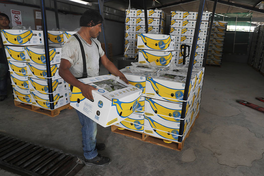 A worker stacks a box of freshly harvested Chiquita bananas to be exported, at a farm in Ciudad ...