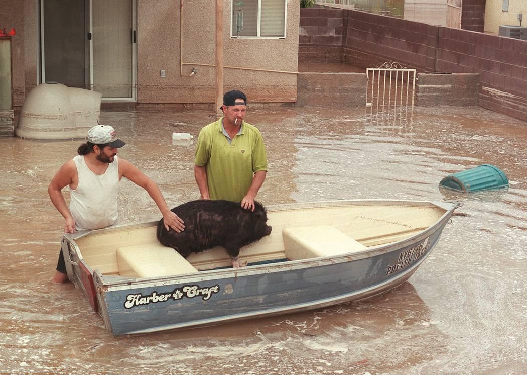Chris Kangas, a la izquierda, y Mike Suits calman a un cerdo que rescataron en una residencia e ...