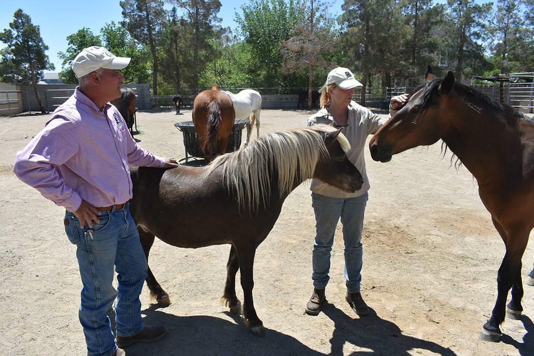 'Funny Farm Mustangs' brinda una oportunidad de vida para burros y caballos que antes habit ...