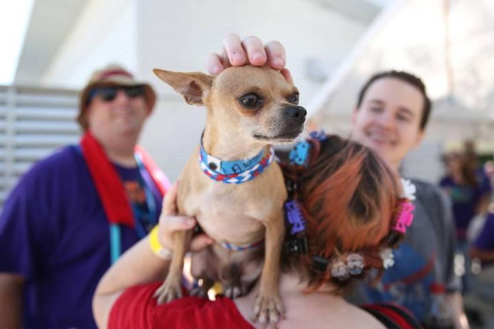 Karen Hughes de Las Vegas sostiene a un perro que le interesó adoptar durante el evento nacion ...