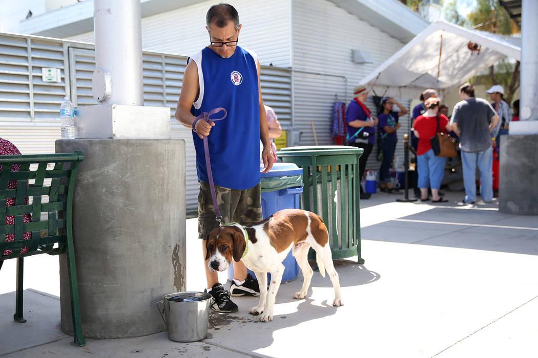Jesús Chávez de Las Vegas pasea a un perro en su búsqueda por encontrar una mascota para su ...