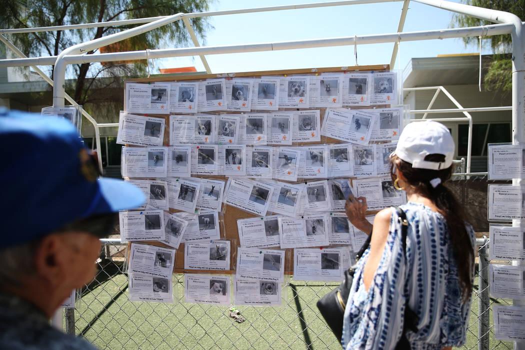 La gente mira el tablero de perros disponible durante el evento nacional Clear the Shelters en ...