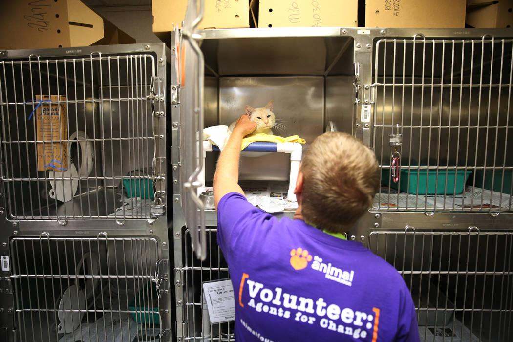 El voluntario Jay Bartos acaricia a un gato durante el evento nacional Clear the Shelters en la ...