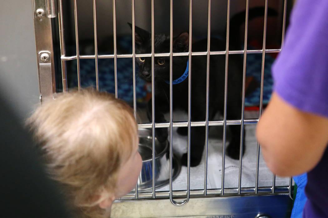 Kirstin Gies, de 5 años, de Las Vegas, mira al gato que sus padres adoptaron durante el evento ...