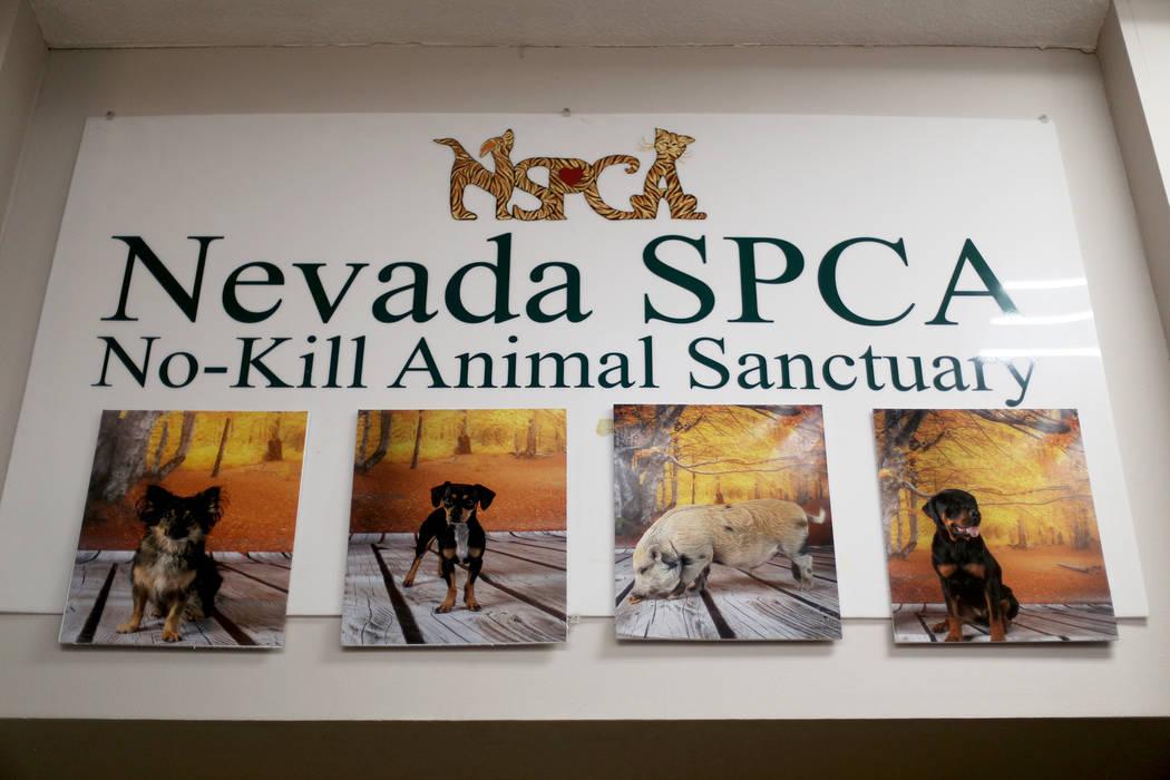 La Sociedad de Nevada para la Prevención de la Crueldad Animal en Las Vegas el lunes, 15 de ab ...