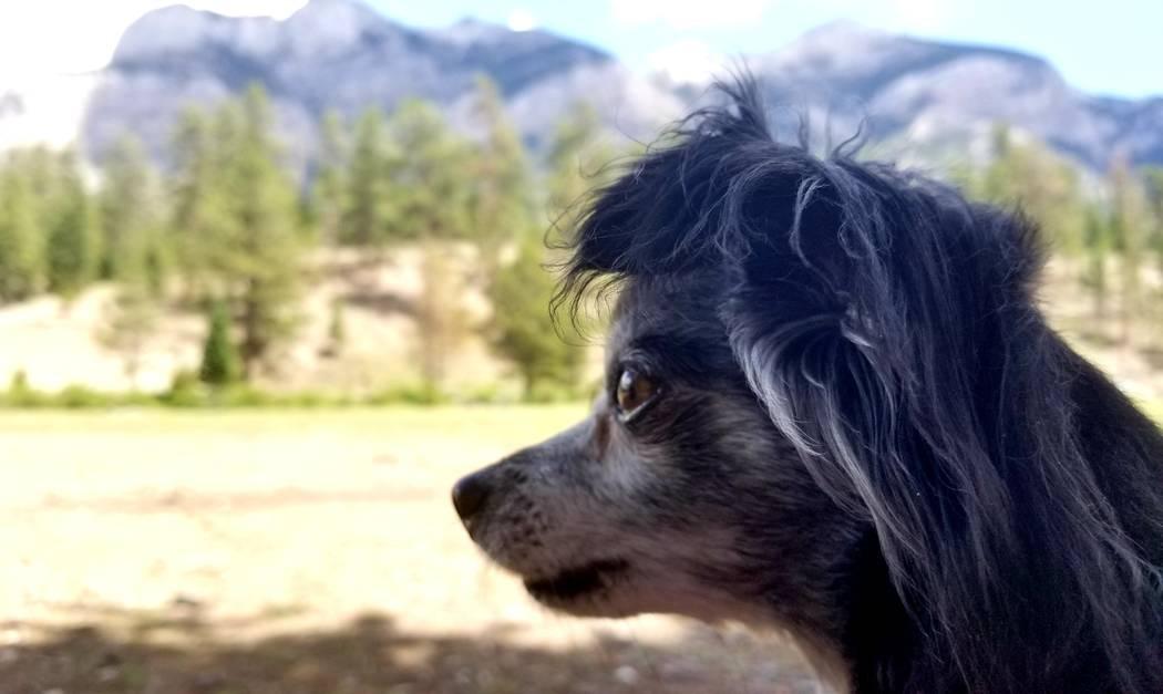 Antes de una caminata a fines de julio, Chica Burt disfruta de las vistas de montañas en Lower ...