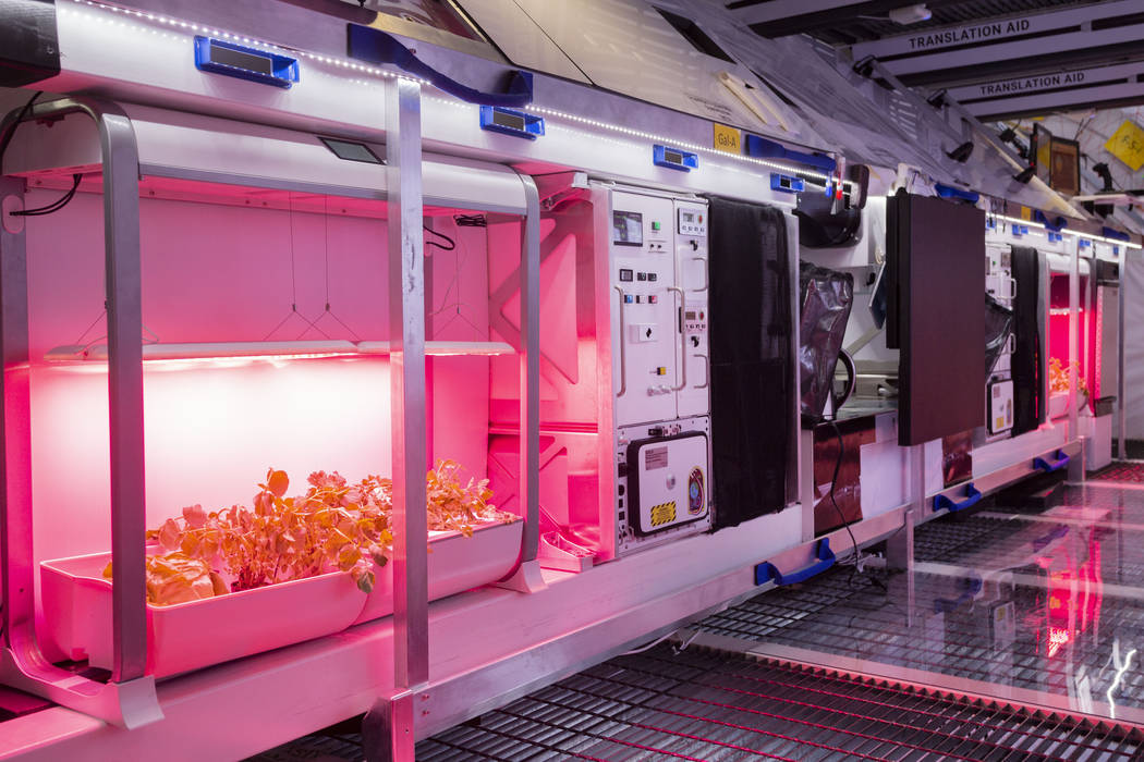 Jardines de vegetales en B330 Mars Transporter Testing Unit en Bigelow Aerospace en North Las V ...