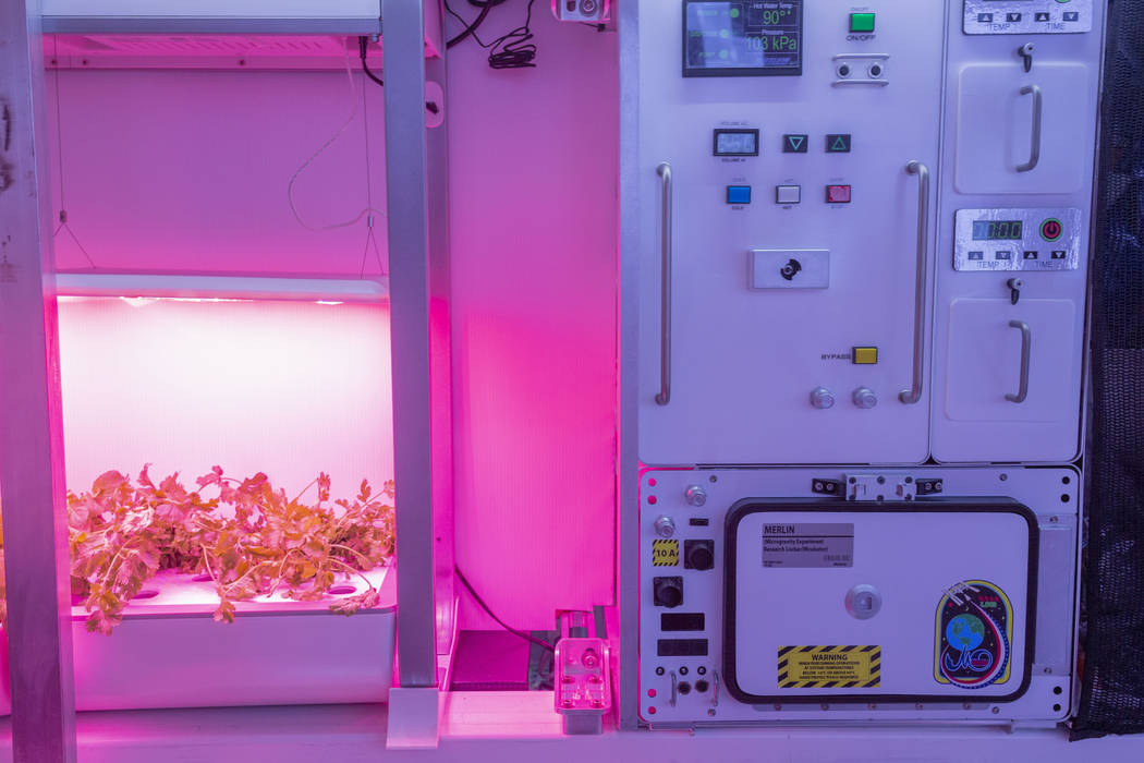 Un jardín de vegetales en B330 Mars Transporter Testing Unit en Bigelow Aerospace en North Las ...