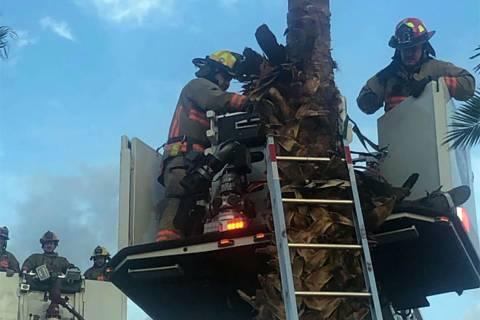 El Departamento de Bomberos de Las Vegas rescató a un hombre de una palmera en el este de Las ...