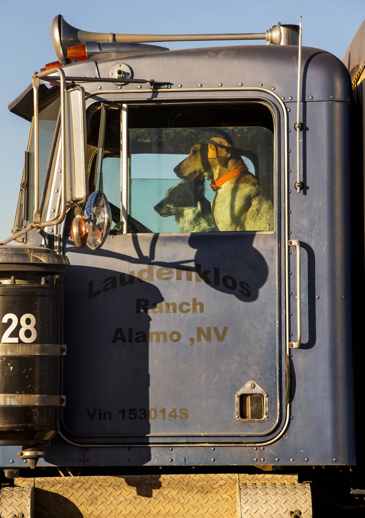 Dos perros se sientan en los asientos de un remolque estacionado frente al Little A'Le'Inn, que ...