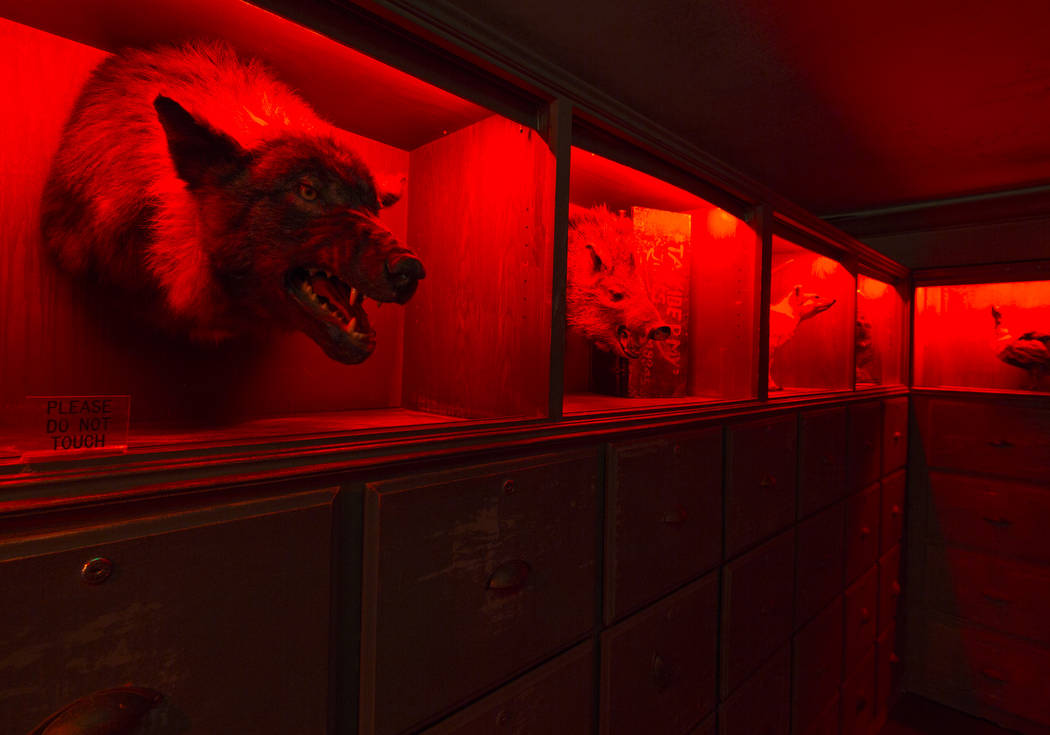 Un pasillo adornado con animales taxidermizados en el Museo Encantado de Zak Bagans ubicado en ...