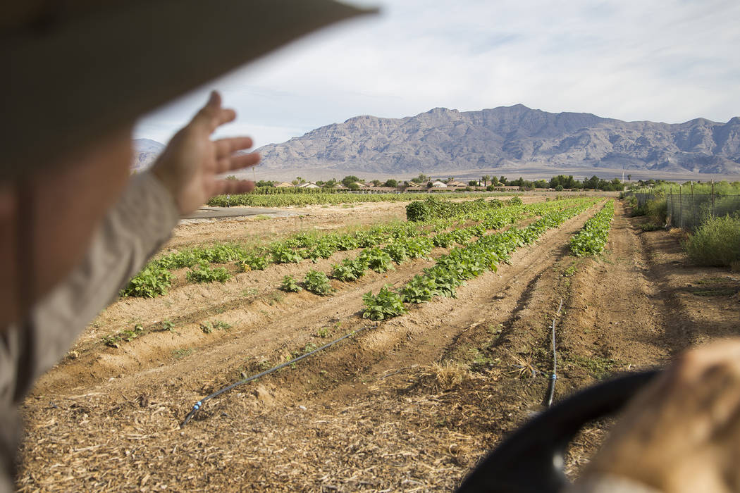 Mark Ruben, director de Gilcrease Orchard, muestra los cultivos de judías verdes del huerto en ...